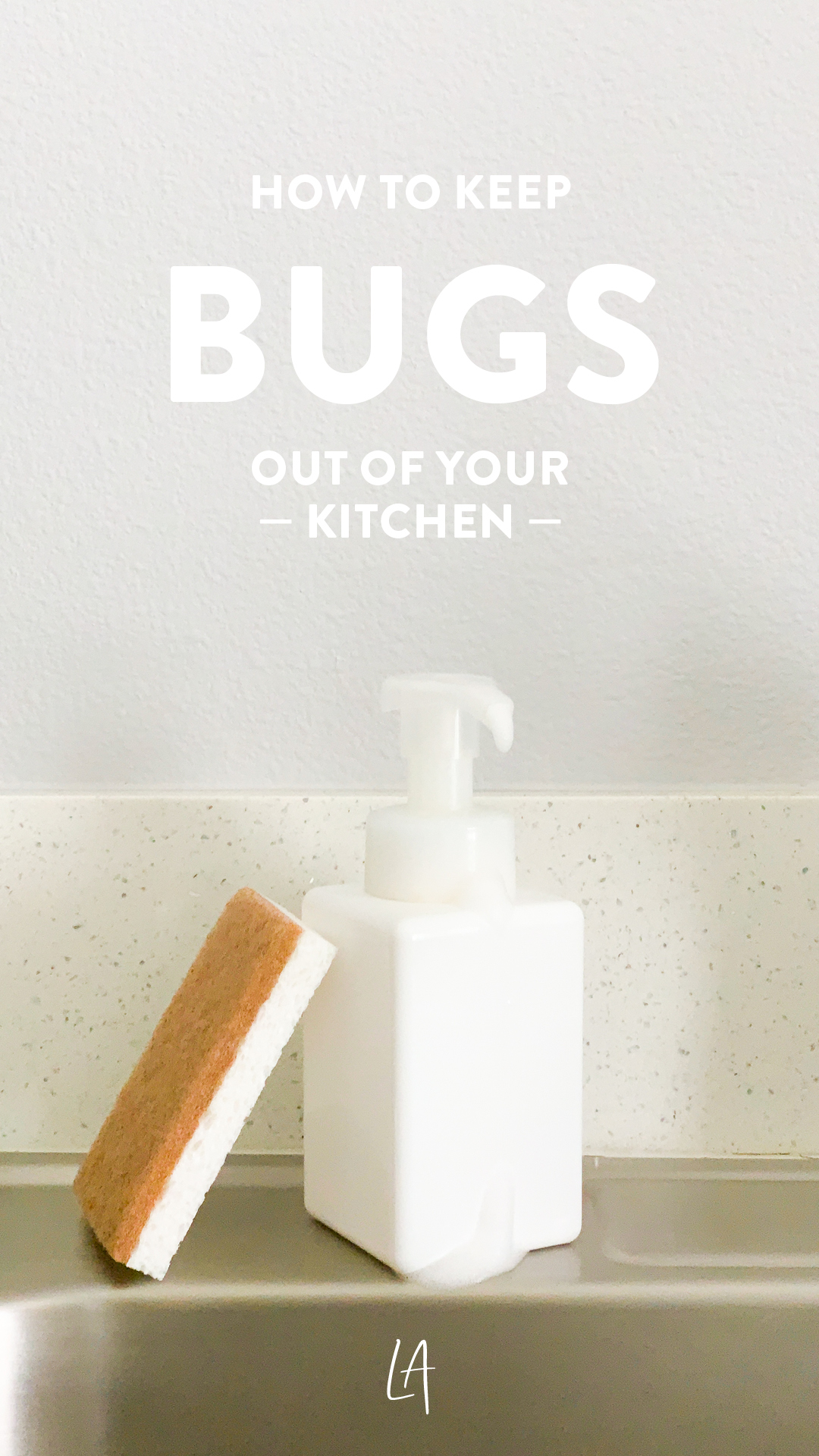 How to keep bugs out of your kitchen